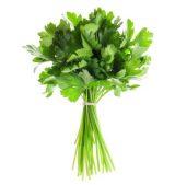 cilantro-producto